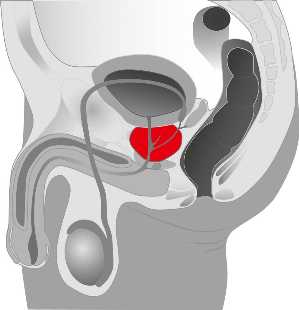 https://extaz.by/image/catalog/kartinki/analnyestimuljatory/prostata/50734200003.jpg